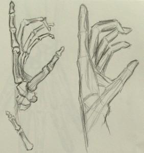 Hand_Skeleton1