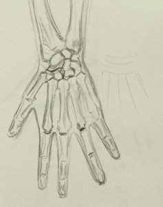 Hand_Skeleton2
